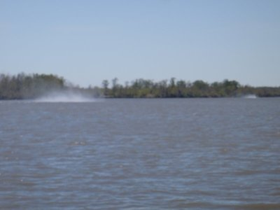 An Air Boat in the distance and the spray kicked up by the rear prop