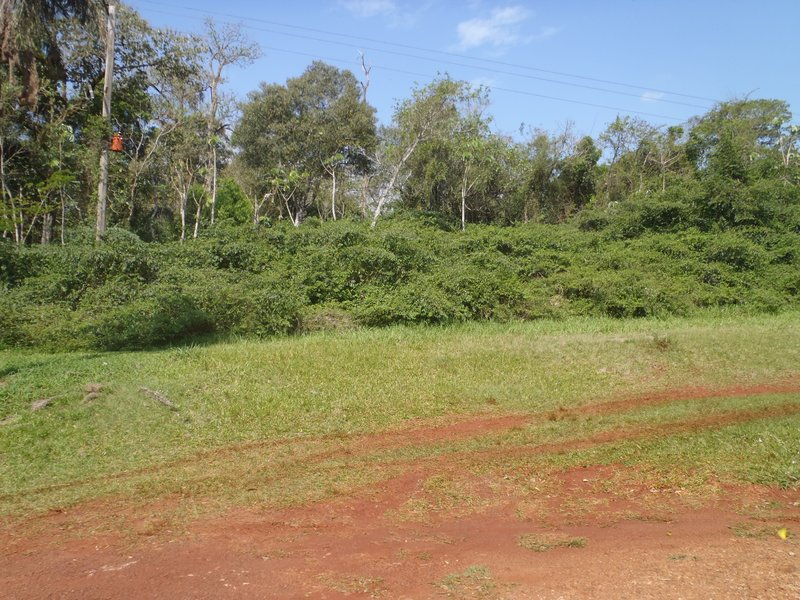 The local area at PI