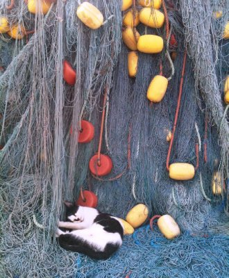 Fish nets, sleeping cats and no fish...1 1=3