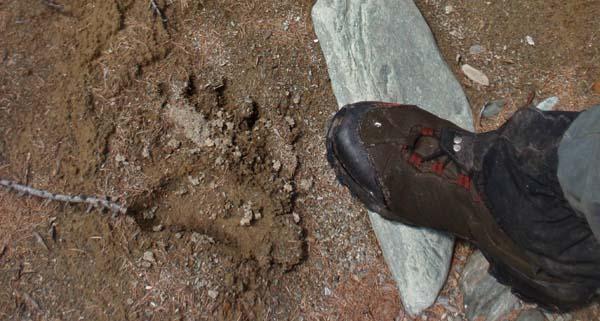 large_footprint.jpg