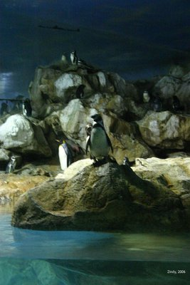 "Penguins: ""Is it so hot out there?"""