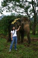 Me & Mr. Elephant