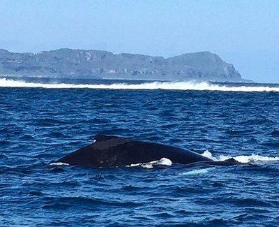 galeraswhales.jpg