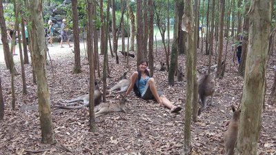 Chilling out with the Kangaroos in Australia Zoo