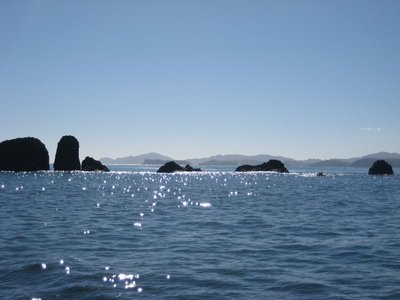 Bay of Islands- Note the complete lack of Dolphins