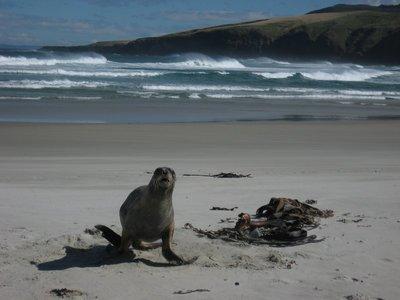 Seal Attack!