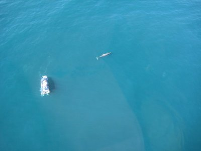 Whales Looking Pretty Small From Above