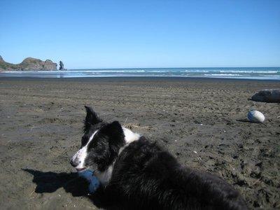 Piha Beach With Daisy The Dog
