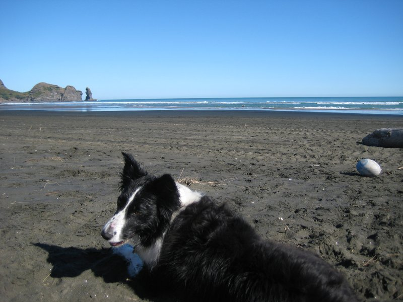Piha Beach With Daisy The Dog