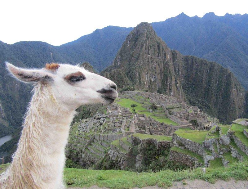 large_1Alpaca_Machu_Picchu.jpg
