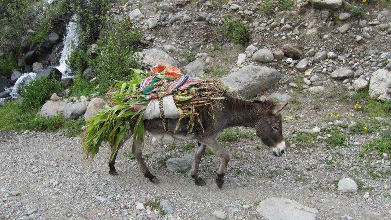 large_Donkey.jpg