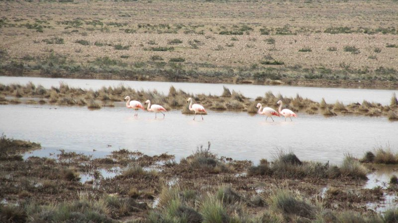 large_Flamingoes.jpg