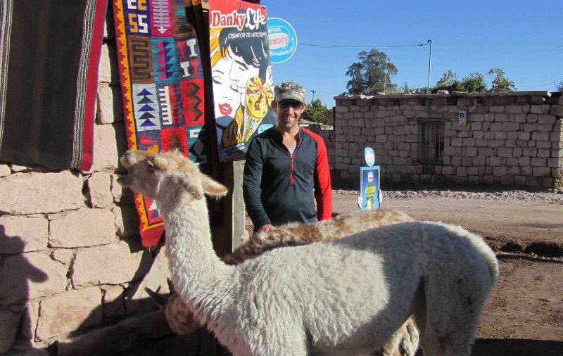 large_Lach_Llama.jpg