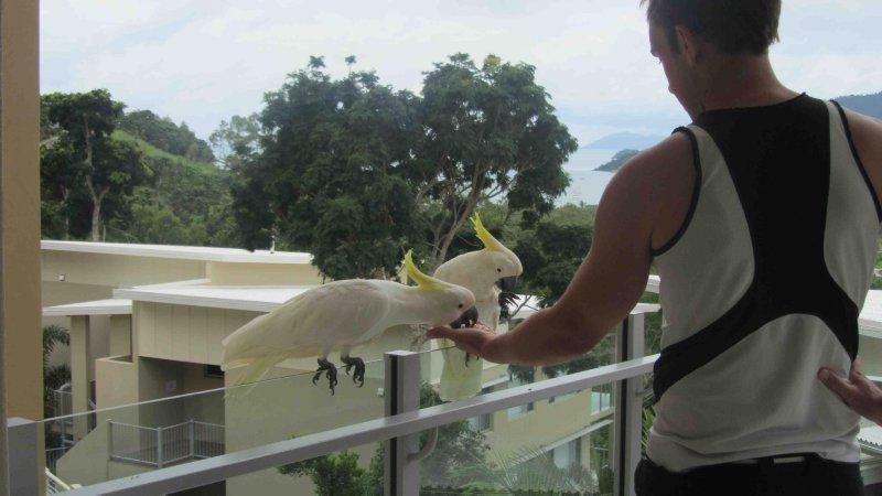 large_Lach_feeding_birds.jpg
