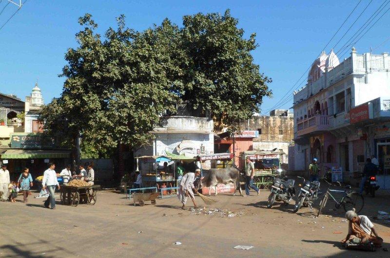 large_Pushkar_Street.jpg