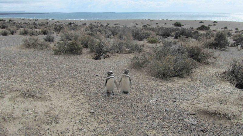 large_penguin3.jpg