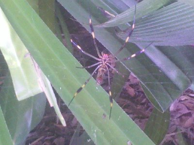 Spider's lair