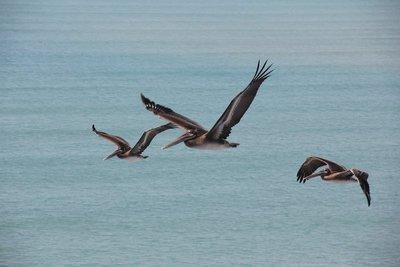 Pelican view