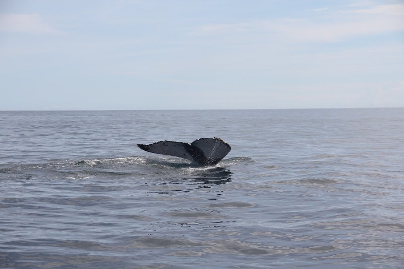 Whale tail (fluke)