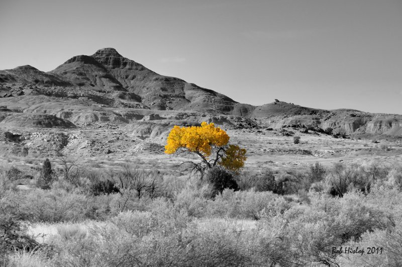 Lone Cottonwood