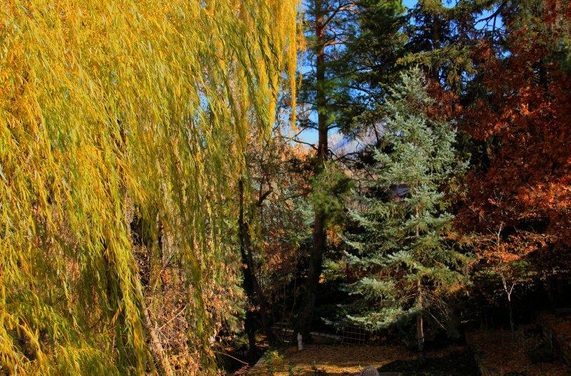 Fall Colors in Salt Lake City, UT