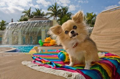 Take Your Pet With You. Reserve at Pet Hotels of America
