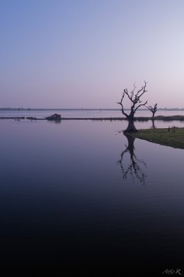 Another arty shot with a tree, from Ubein bridge