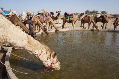 Our camels getting ready for our three day safari through the desert near the Pakastani border