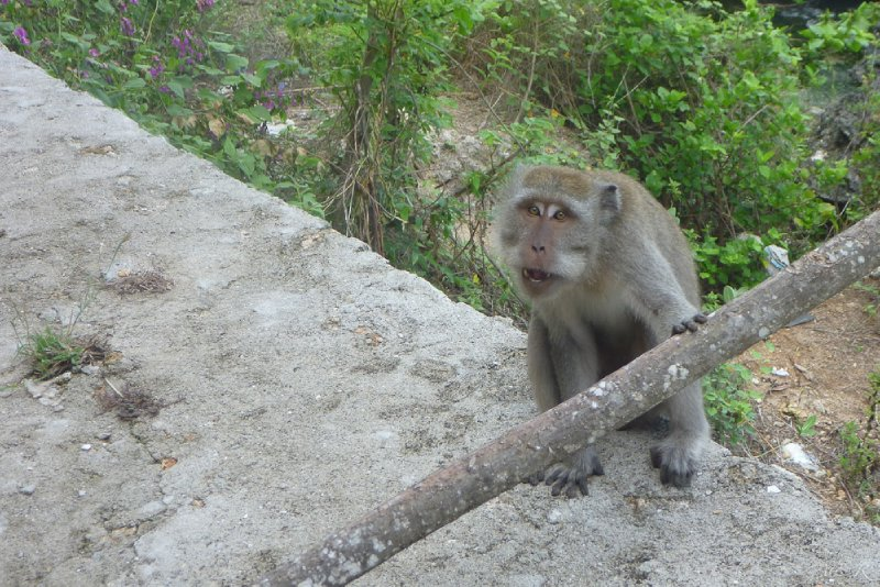 Monkey encounter - 05/11/11