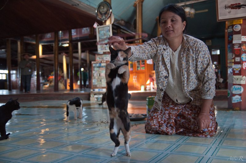 Half hourly show at the cat jumping monastery - yes this really exists