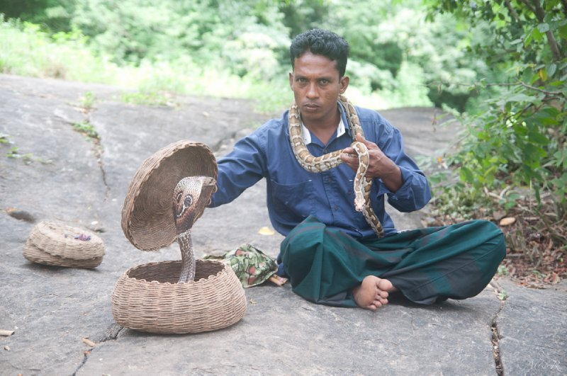 A snake charmer with his cobra beside the path on the way to the Dambulla caves, which are filled with Buddhist cave art paintings and carvings