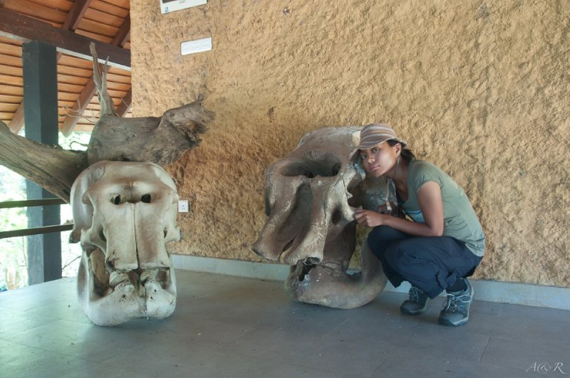 Nothing makes you feel small like an elephant skull or two