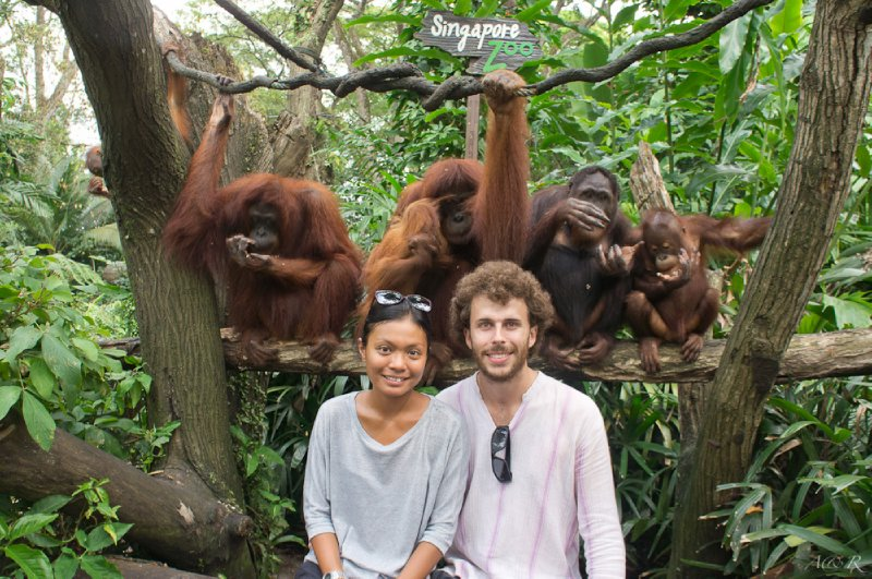 Getting up close with the orang utans, who roam free on vines overhead in the Zoo!