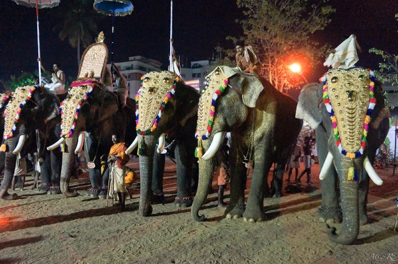 The annual Temple Festival in Kochin was visually and aurally captivating with 12 decorated elephants roaming through bands of drummers and ear piercing fire works