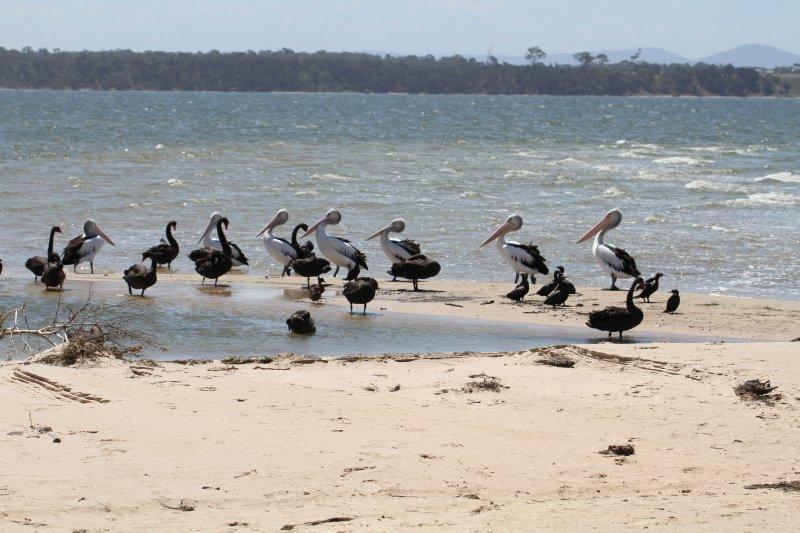 Birdlife on Lake Victoria