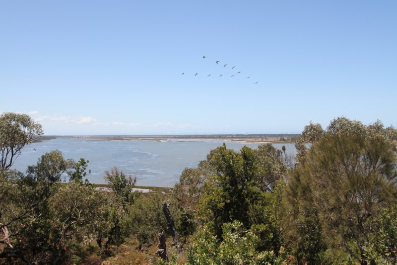 Flock of pelicans at Lake Reeve