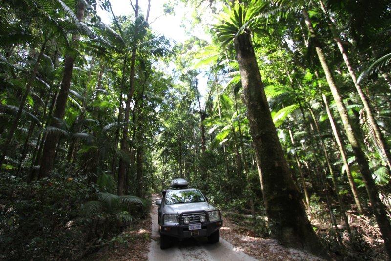 Forest scenic drive