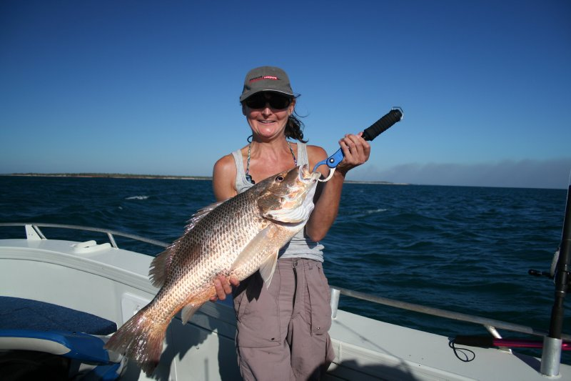 Golden Snapper at Cobourg Peninsula at the top of the NT