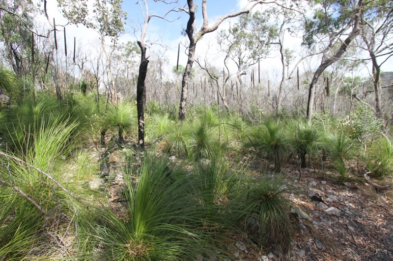 Grass trees