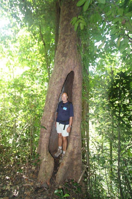 Hideaway tree