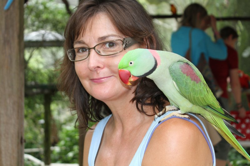 Friendly Alexandrine Parrot