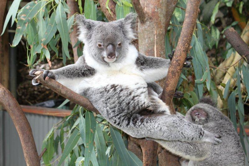 Koala gym