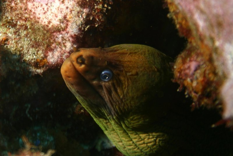Moray eel in Fish Rock Cave
