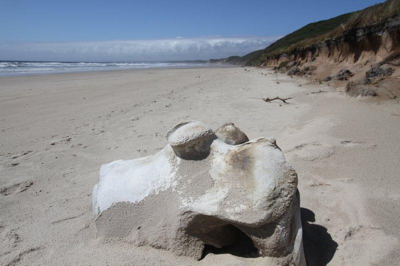 Whale bones on Ocean Beach