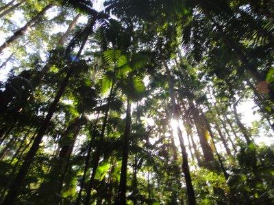Regenwald, der aus dem Sand wächst