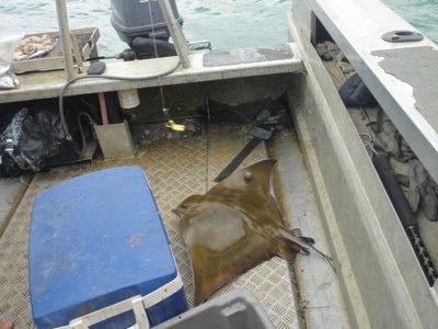 Unser vermeindlich grosser Fang... ein Sting Ray... gross schon aber ungeniessbar
