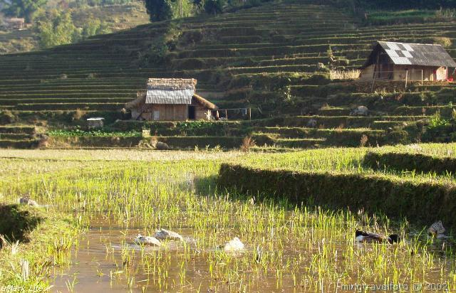 Rice terrace @ Sapa