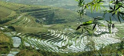 Rice Terrace @ Sapa