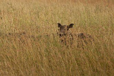 Warthogs 22
