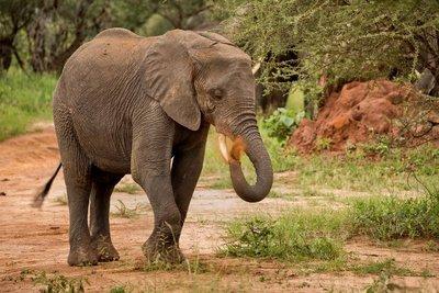 Elephants 36